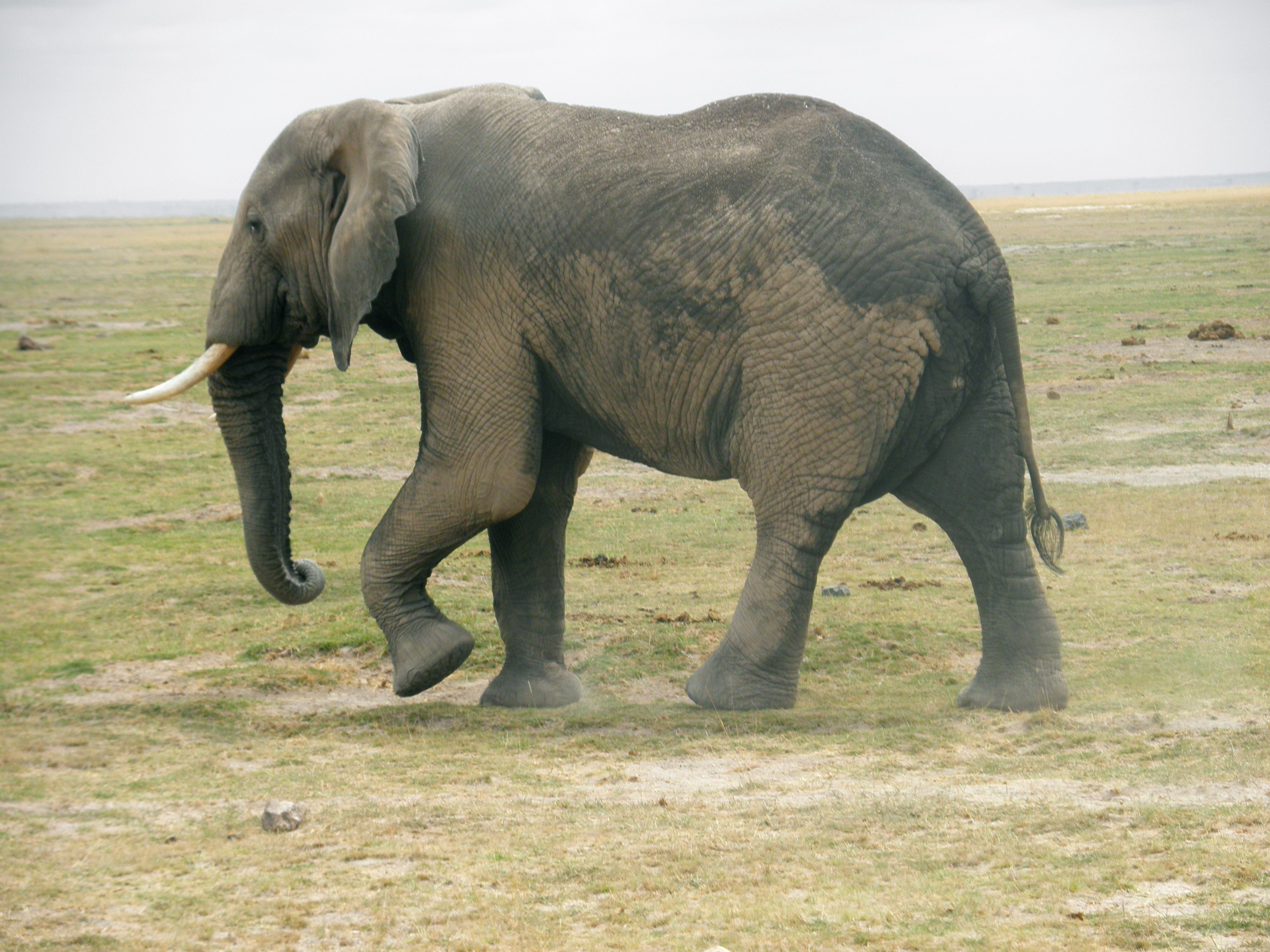 壁纸 大象 动物 3968_2976