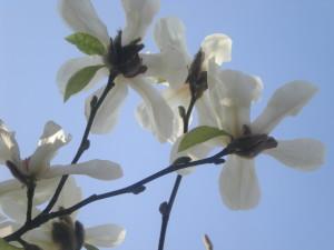 London 090321 006 flower tree