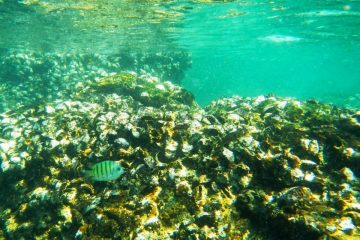 coral and fish green water